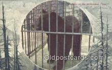 ber001564 - Milwaukee Zoo, Wis USA Bear Postcard Bear Post Card Old Vintage Antique