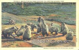 ber001566 - Yellowstone National Park Bear Postcard Bear Post Card Old Vintage Antique