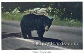 ber001572 - Copper County Bear Postcard Bear Post Card Old Vintage Antique