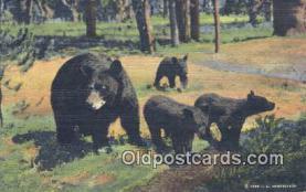 ber001573 - Bear Postcard Bear Post Card Old Vintage Antique