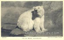 ber001574 - Whipsnade Bear Postcard Bear Post Card Old Vintage Antique