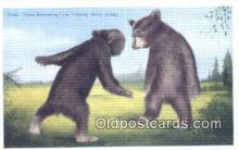 ber001577 - Fighting Bears Alaska, USA Bear Postcard Bear Post Card Old Vintage Antique