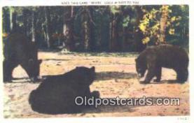 ber001578 - Bear Postcard Bear Post Card Old Vintage Antique