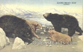 ber001579 - Alaska Brown Bear Postcard Bear Post Card Old Vintage Antique