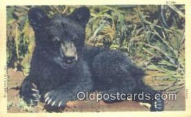 ber001580 - Bear Postcard Bear Post Card Old Vintage Antique