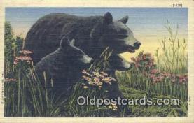 ber001581 - Bear Postcard Bear Post Card Old Vintage Antique