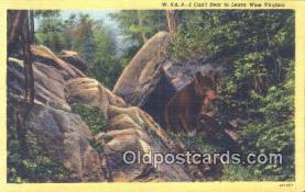 ber001583 - West Virginia Bear Postcard Bear Post Card Old Vintage Antique