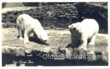 ber001602 - Real Photo San Diego Zoo, Cal USA Bear Postcard Bear Post Card Old Vintage Antique