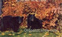 ber001605 - Greetings Phillips, Wisconsin Bear Postcard Bear Post Card Old Vintage Antique