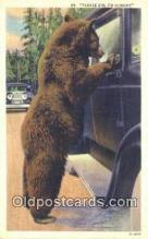 ber001617 - Bear Postcard,  Bear Post Card Old Vintage Antique
