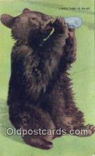 ber001618 - Lunch Time in Maine Bear Postcard,  Bear Post Card Old Vintage Antique