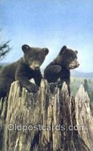 ber001621 - Lake Placid, NY USA Bear Postcard,  Bear Post Card Old Vintage Antique