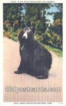 ber001623 - Great Smoky Mnt. National Park Bear Postcard,  Bear Post Card Old Vintage Antique
