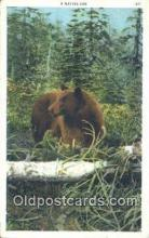ber001625 - Bear Postcard,  Bear Post Card Old Vintage Antique