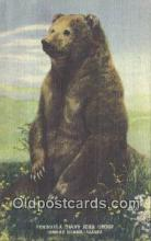 ber001626 - Unimak Island Alaska Bear Postcard,  Bear Post Card Old Vintage Antique