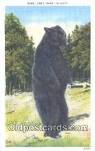 ber001627 - Bear Postcard,  Bear Post Card Old Vintage Antique