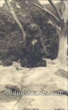 ber001630 - Zoological Park, Edinburgh, Scotland Bear Postcard,  Bear Post Card Old Vintage Antique