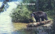 ber001632 - Crystal Falls Michigan, USA Bear Postcard,  Bear Post Card Old Vintage Antique