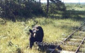 ber001634 - Toonerville Trolley Bear Postcard,  Bear Post Card Old Vintage Antique