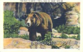 ber001637 - Bear Postcard,  Bear Post Card Old Vintage Antique