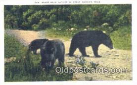 ber001638 - Great Smoky Mnt. National Park Bear Postcard,  Bear Post Card Old Vintage Antique