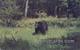 ber001640 - Bear Postcard,  Bear Post Card Old Vintage Antique