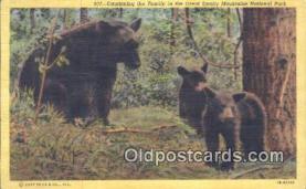 ber001641 - Great Smoky Mnt. National Park Bear Postcard,  Bear Post Card Old Vintage Antique