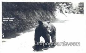 ber001645 - Bear Postcard,  Bear Post Card Old Vintage Antique