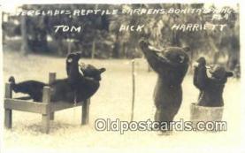 ber001646 - Bonita Springs, Fla, USA Bear Postcard,  Bear Post Card Old Vintage Antique