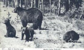 ber001649 - North Platte, Nebraska, USA Bear Postcard,  Bear Post Card Old Vintage Antique