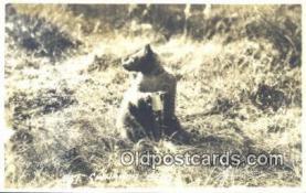ber001651 - Cinnamon Bear Postcard,  Bear Post Card Old Vintage Antique