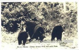ber001652 - Great Smoky Mnt. National Park Bear Postcard,  Bear Post Card Old Vintage Antique