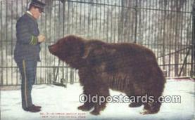 ber001653 - Alaskan, New York Zoological Park Bear Postcard,  Bear Post Card Old Vintage Antique
