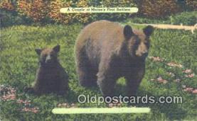 ber001658 - Maine, USA Bear Postcard,  Bear Post Card Old Vintage Antique