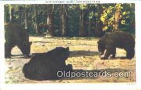 ber001659 - Bear Postcard,  Bear Post Card Old Vintage Antique