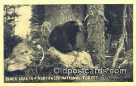 ber001660 - Northwest National Forest Bear Postcard,  Bear Post Card Old Vintage Antique