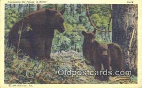 ber001661 - Maine, USA Bear Postcard,  Bear Post Card Old Vintage Antique