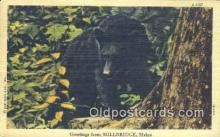 ber001662 - Greetings from Millbridge, Maine USA Bear Postcard,  Bear Post Card Old Vintage Antique