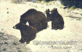 ber001664 - Bear Postcard,  Bear Post Card Old Vintage Antique