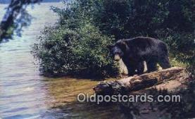 ber001668 - Bear Postcard,  Bear Post Card Old Vintage Antique