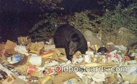 ber001672 - Central Adirondacks, New York, USA Bear Postcard,  Bear Post Card Old Vintage Antique