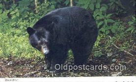 ber001674 - Bear Postcard,  Bear Post Card Old Vintage Antique