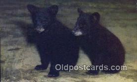 ber001676 - Bear Postcard,  Bear Post Card Old Vintage Antique
