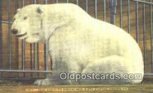 ber001677 - Ringling Bros. Winter Quarters, Sarasota, FL, USA Bear Postcard,  Bear Post Card Old Vintage Antique