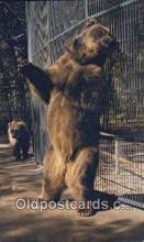 ber001678 - Dakota Zoo, Bismarck, North Dakota, USA Bear Postcard,  Bear Post Card Old Vintage Antique