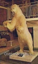 ber001679 - Lobby Holiday Inn, Moline Illinois, USA Bear Postcard,  Bear Post Card Old Vintage Antique