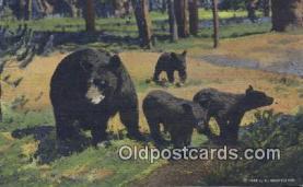 ber001718 - Bear Postcard,  Bear Post Card Old Vintage Antique