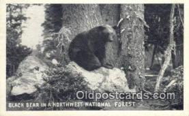 ber001722 - Northwest National Forest Bear Postcard,  Bear Post Card Old Vintage Antique