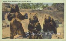 ber001728 - Kodiac Bears Brookfield Zoo, Chicago Illinois, USA, Bear Postcard Post Card Old Vintage Antique