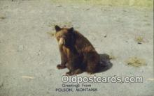 ber001729 - Greetings from Polson Montana, USA, Bear Postcard Post Card Old Vintage Antique